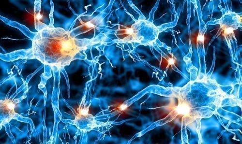 Обмен веществ в клетках человека