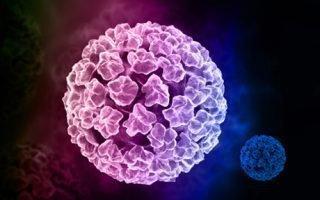 Бородавочный вирус папилломы