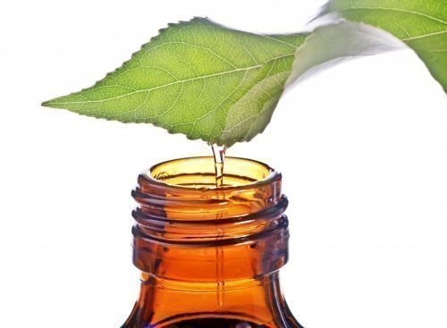 Масло чайного дерева от папиллом, применение эфирных масел дома