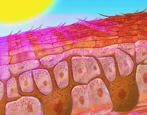 Ультрафиолет и кожа