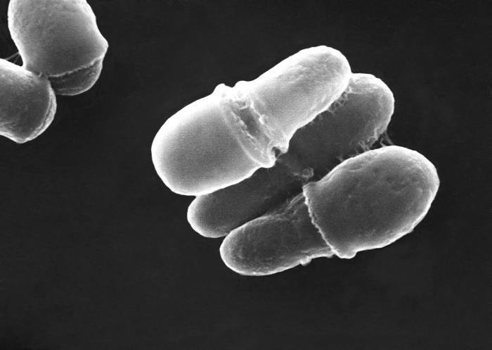 Себорея кожи лица и народние рецепты от дерматита