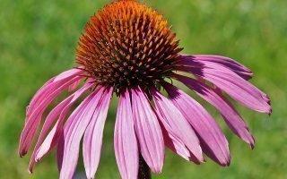 Лечение крапивницы, эффективные препараты или как быстро вылечиться