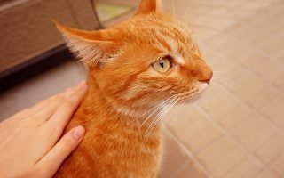 Причины появления зудящего дерматита