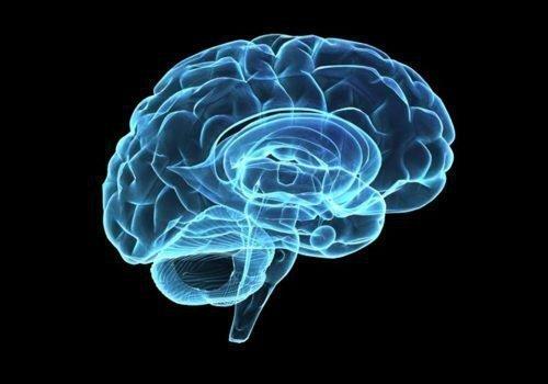 Базальные ядра головного мозга: функции ганглии