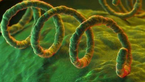 Вирус сифилиса