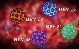 Определение вируса папилломы человека 45 типа у женщин