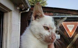 Симптомы и лечение лишая от кошек