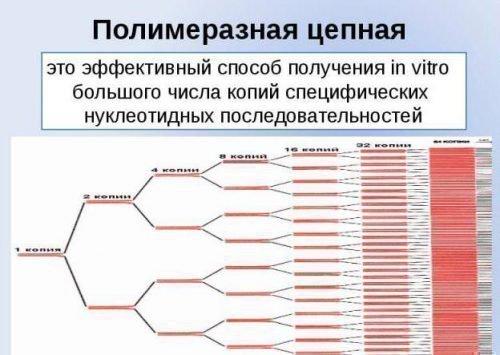 Впч 21 тип что это такое: что за вирус, лечение