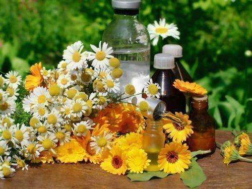 Отвар из цветков ромашки, календулы и шалфея